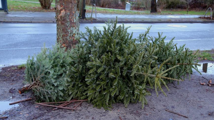 Weihnachtsbaum-Entsorgung der BSR