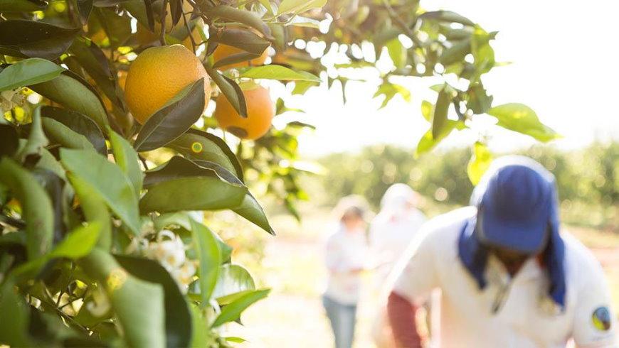 Nachhaltiger Orangensaft