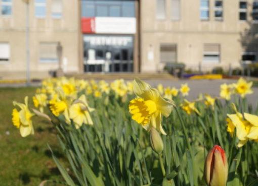 Blütenzauber am Rathaus Reinickendorf