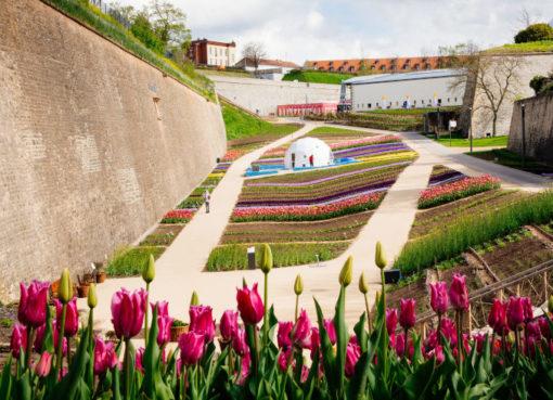 Erfurter Gartenschätze im Festungsgraben
